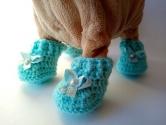 Черевички для собачки Чи Чи Лав Блум Dutunka